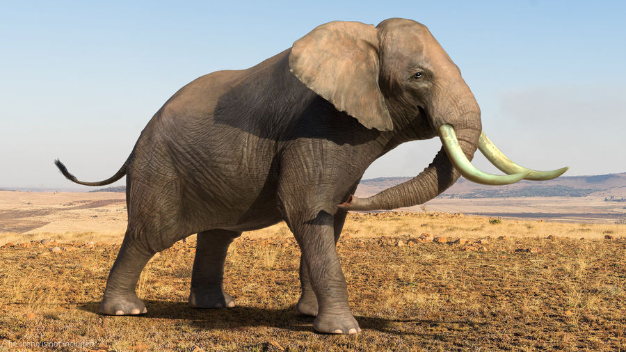 Animated Elephants Collection royalty-free 3d model - Preview no. 18