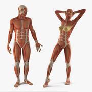 Collection truquée d'anatomie du système musculaire masculin et féminin 3d model