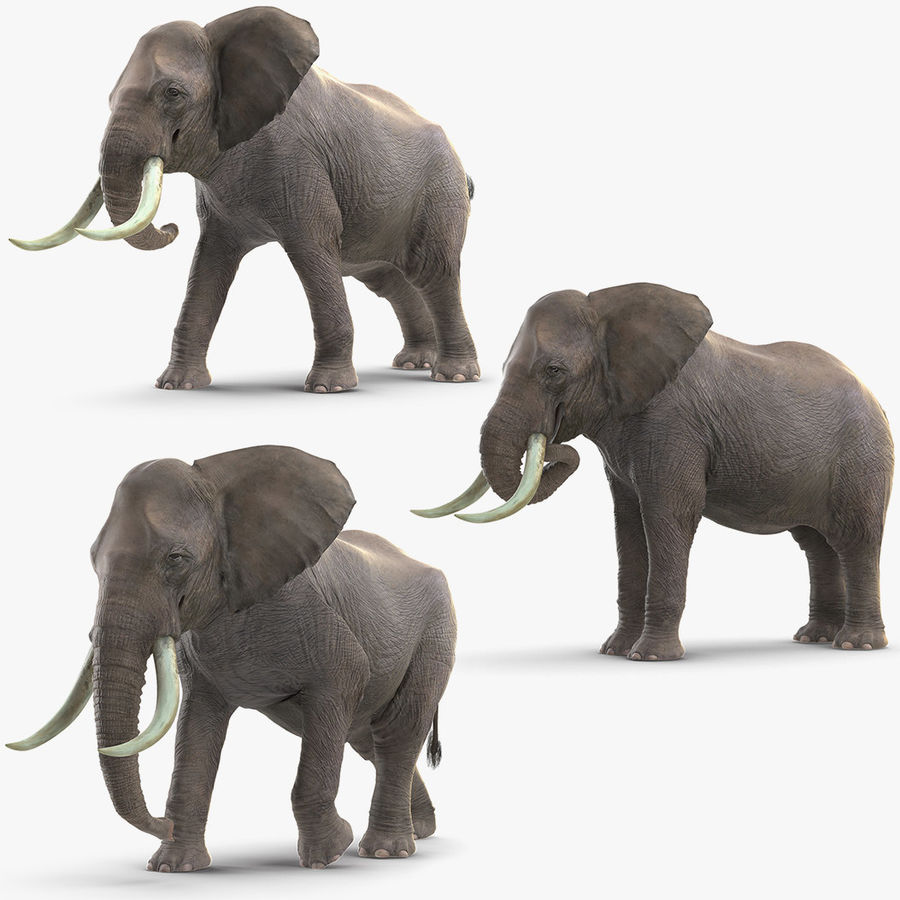 Animated Elephants Collection för Maya royalty-free 3d model - Preview no. 2