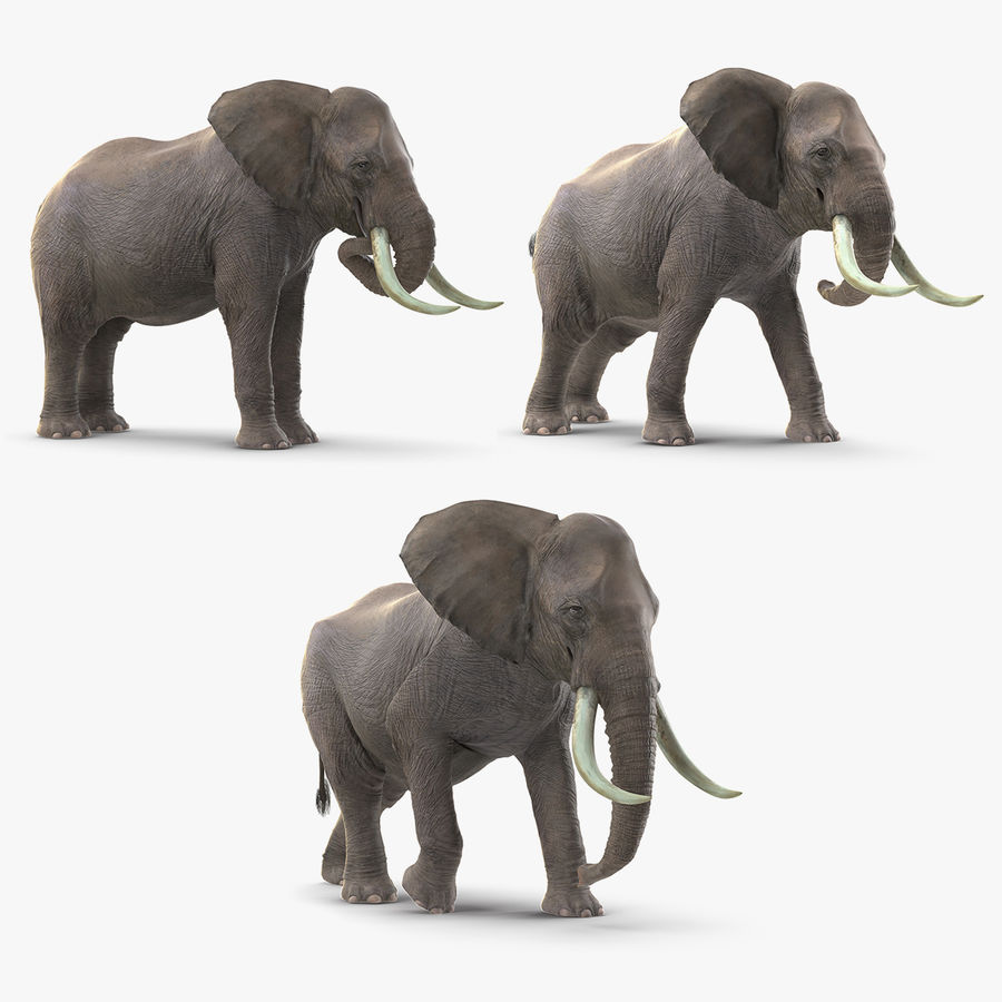Animated Elephants Collection för Cinema 4D royalty-free 3d model - Preview no. 1