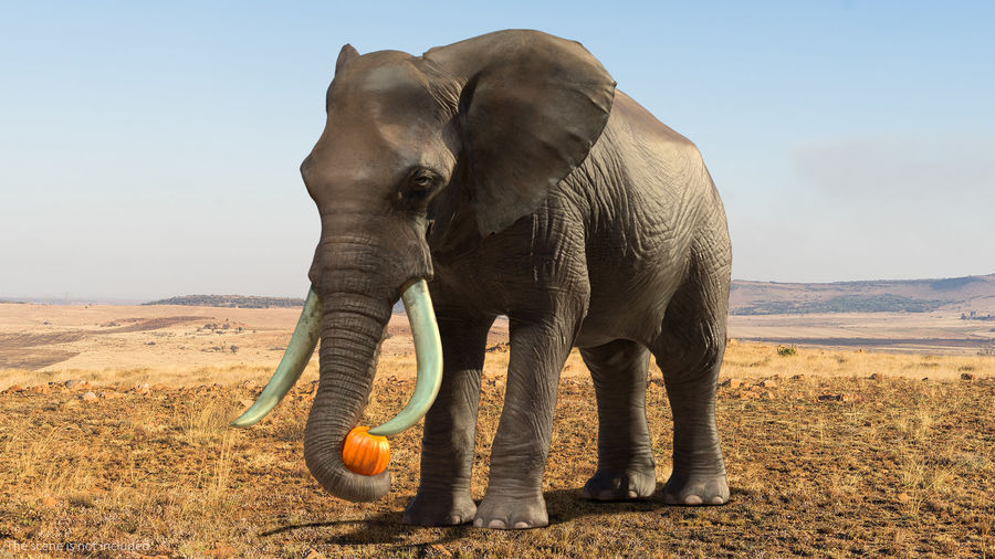 Animated Elephants Collection för Cinema 4D royalty-free 3d model - Preview no. 13
