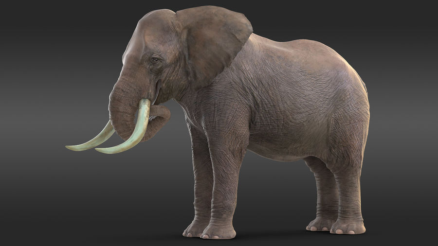 Animated Elephants Collection för Cinema 4D royalty-free 3d model - Preview no. 14