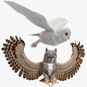 Owls Rigged Collection for Cinema 4D 3d model