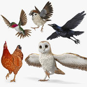 Maya 용 Rigged Birds Collection 2 3d model