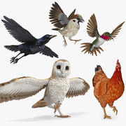 Cinema 4D 용 Rigged Birds Collection 2 3d model