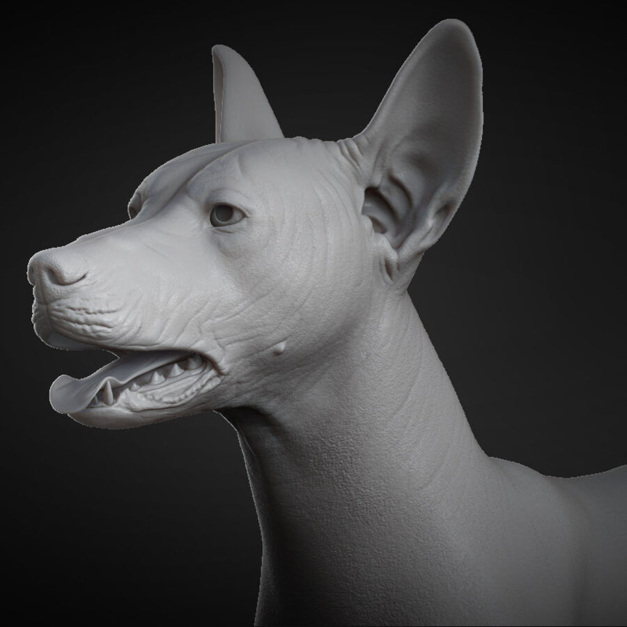 Meksikalı Tüysüz Köpek royalty-free 3d model - Preview no. 9