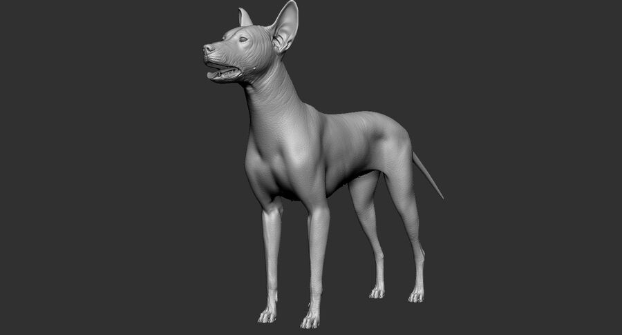 Meksikalı Tüysüz Köpek royalty-free 3d model - Preview no. 16