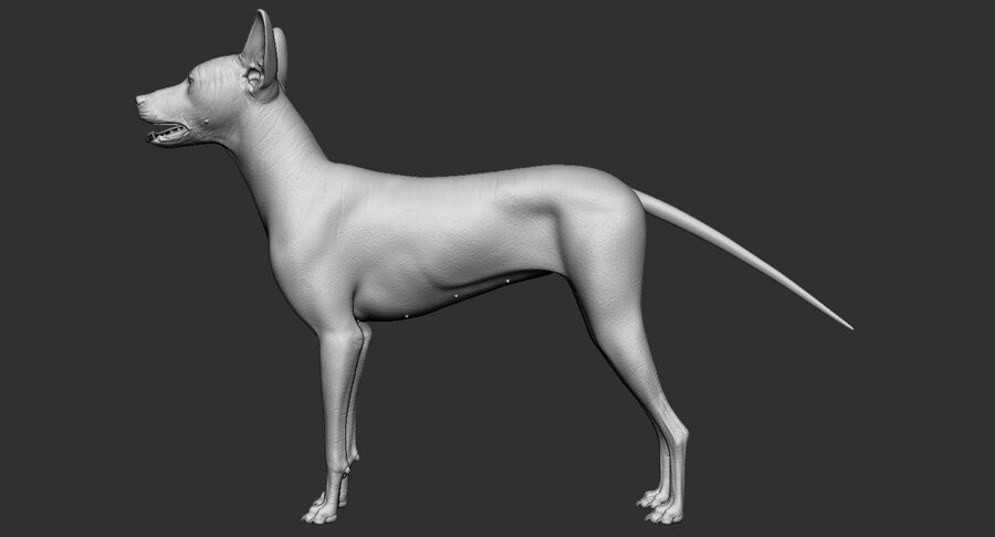 Meksikalı Tüysüz Köpek royalty-free 3d model - Preview no. 12