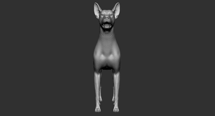 Meksikalı Tüysüz Köpek royalty-free 3d model - Preview no. 11