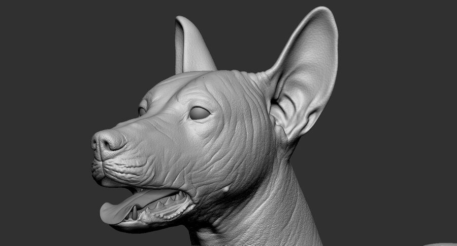Meksikalı Tüysüz Köpek royalty-free 3d model - Preview no. 19