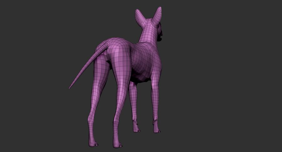 Meksikalı Tüysüz Köpek royalty-free 3d model - Preview no. 23