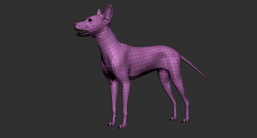 Meksikalı Tüysüz Köpek royalty-free 3d model - Preview no. 22