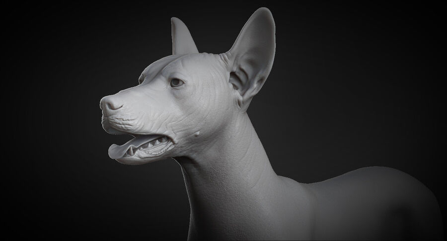 Meksikalı Tüysüz Köpek royalty-free 3d model - Preview no. 10