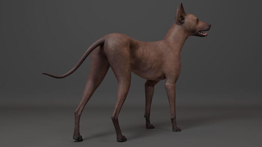 Meksikalı Tüysüz Köpek royalty-free 3d model - Preview no. 3