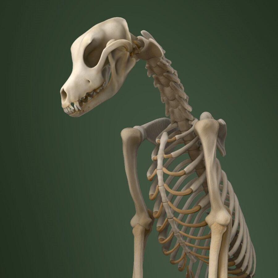 Meksikalı Tüysüz Köpek Tam Anatomi Modeli royalty-free 3d model - Preview no. 19