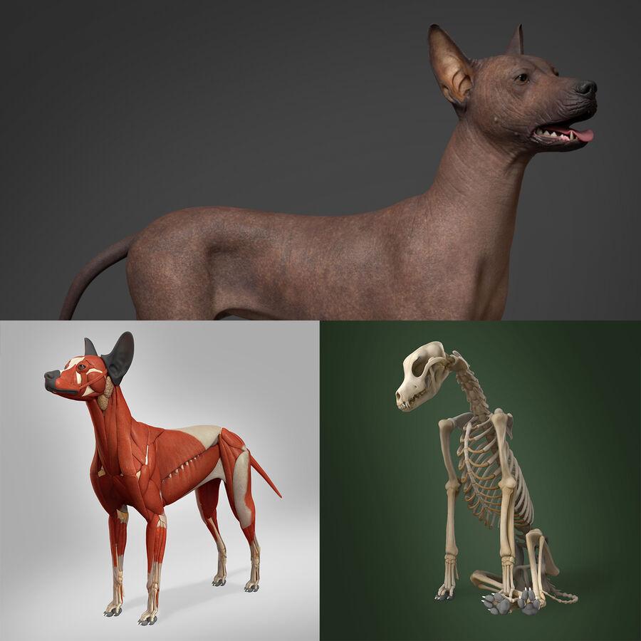 Meksikalı Tüysüz Köpek Tam Anatomi Modeli royalty-free 3d model - Preview no. 1