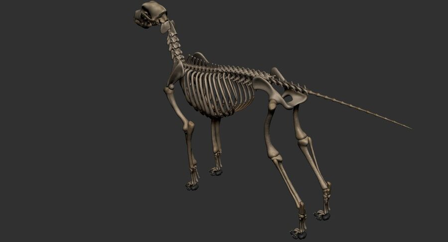 Meksikalı Tüysüz Köpek Tam Anatomi Modeli royalty-free 3d model - Preview no. 52