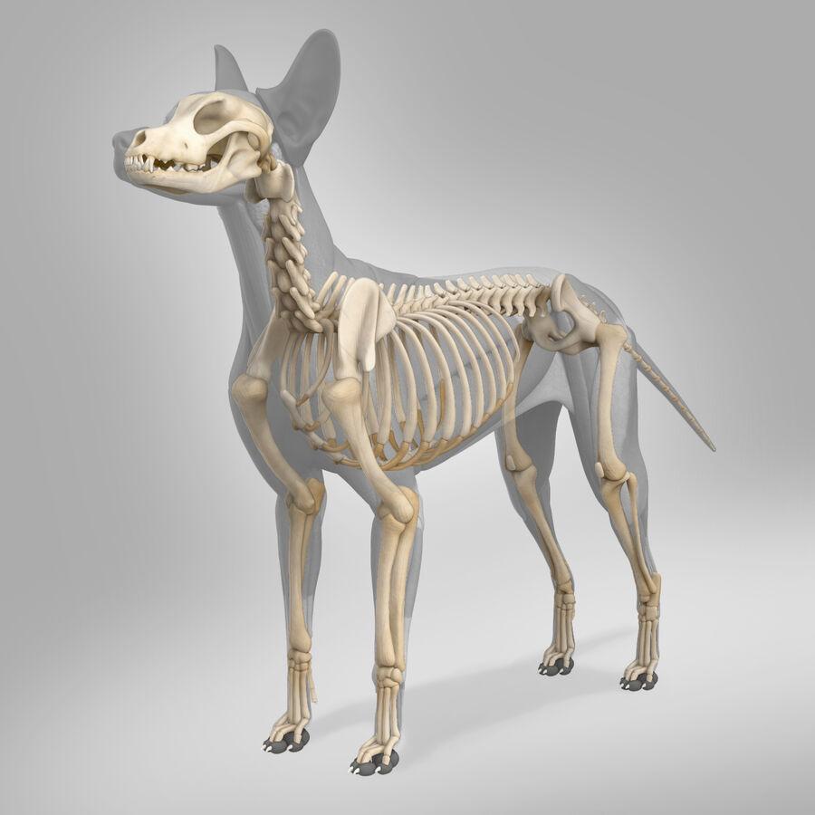 Meksikalı Tüysüz Köpek Tam Anatomi Modeli royalty-free 3d model - Preview no. 18