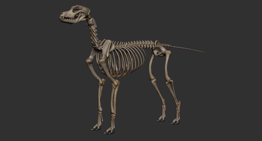 Meksikalı Tüysüz Köpek Tam Anatomi Modeli royalty-free 3d model - Preview no. 51