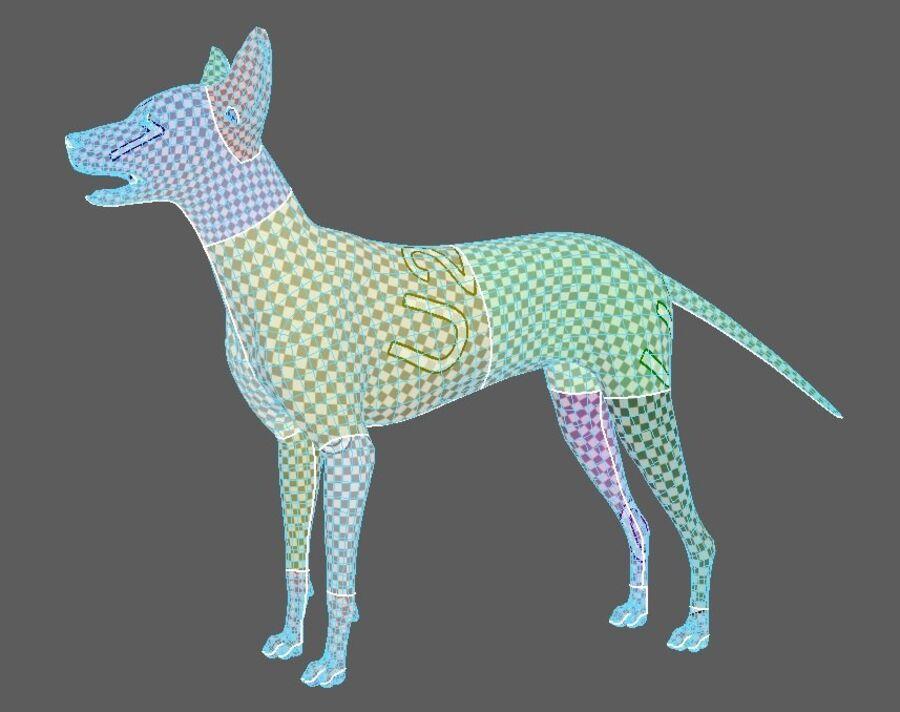 Meksikalı Tüysüz Köpek Tam Anatomi Modeli royalty-free 3d model - Preview no. 9