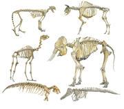 动物骨骼高清 3d model