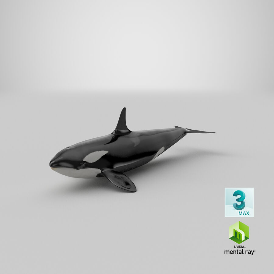Orca royalty-free modelo 3d - Preview no. 25