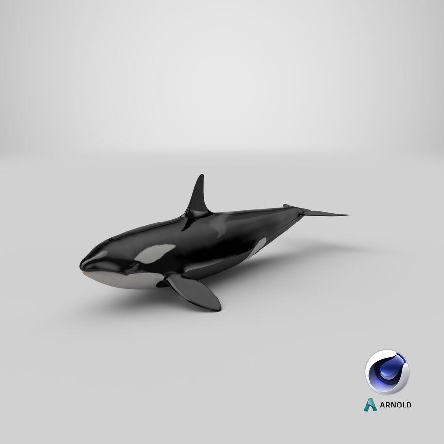Orca royalty-free modelo 3d - Preview no. 21
