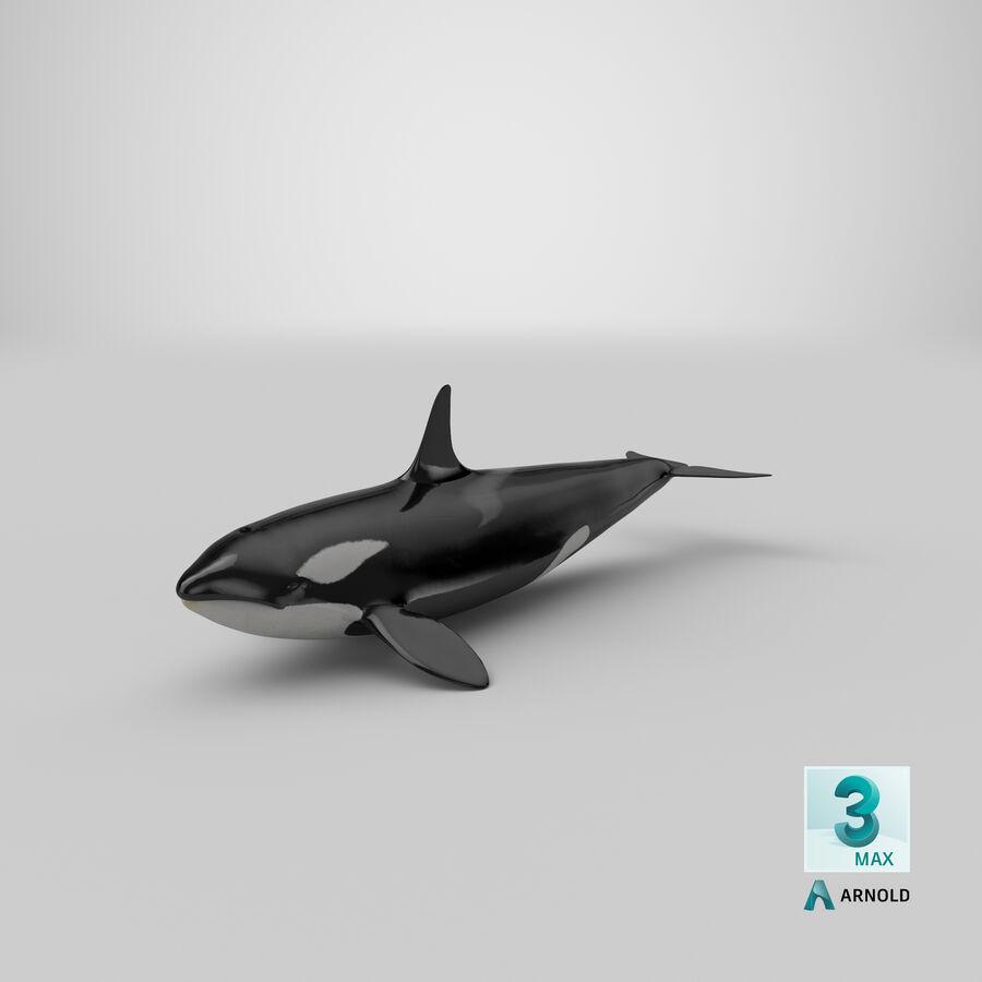 Orca royalty-free modelo 3d - Preview no. 24