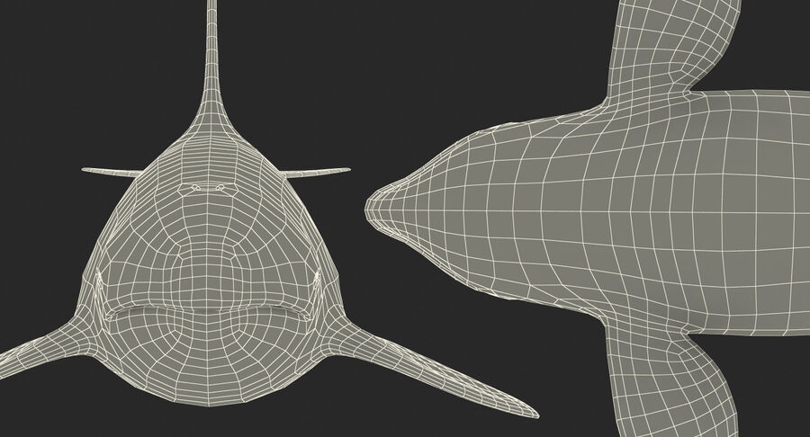 Orca royalty-free modelo 3d - Preview no. 18