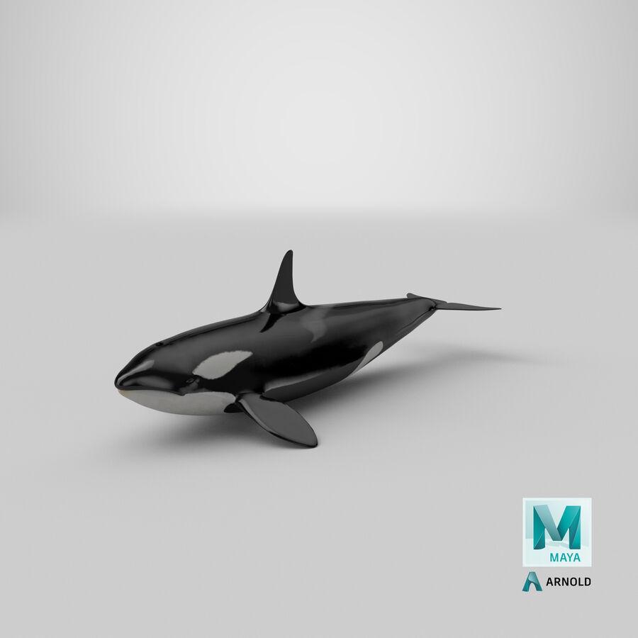 Orca royalty-free modelo 3d - Preview no. 27