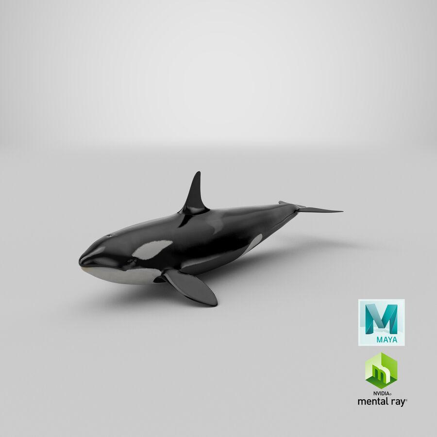 Orca royalty-free modelo 3d - Preview no. 28