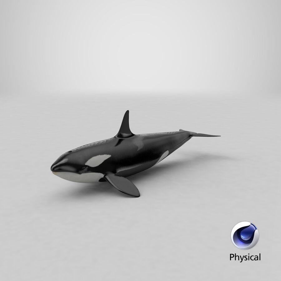 Orca royalty-free modelo 3d - Preview no. 20