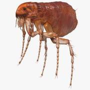Блошиное насекомое 3d model