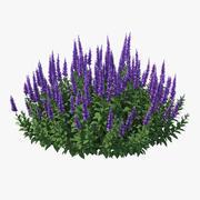 Blooming Meadow Sage Salvia Pratensis 3d model