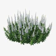 Blooming Meadow Sage Snow Will 3d model