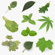Leaves Collection 6 3d model
