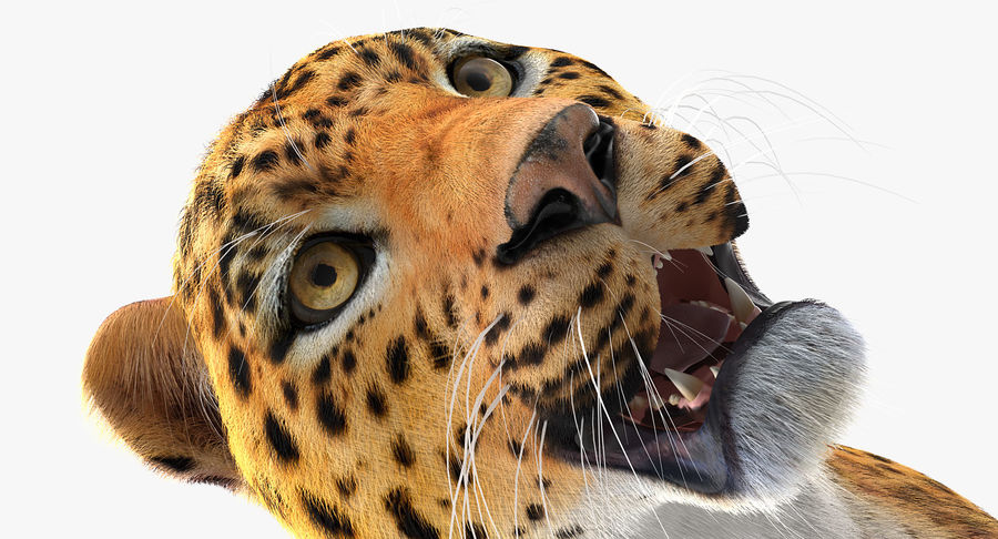 African Animals Collection 7 royalty-free 3d model - Preview no. 49