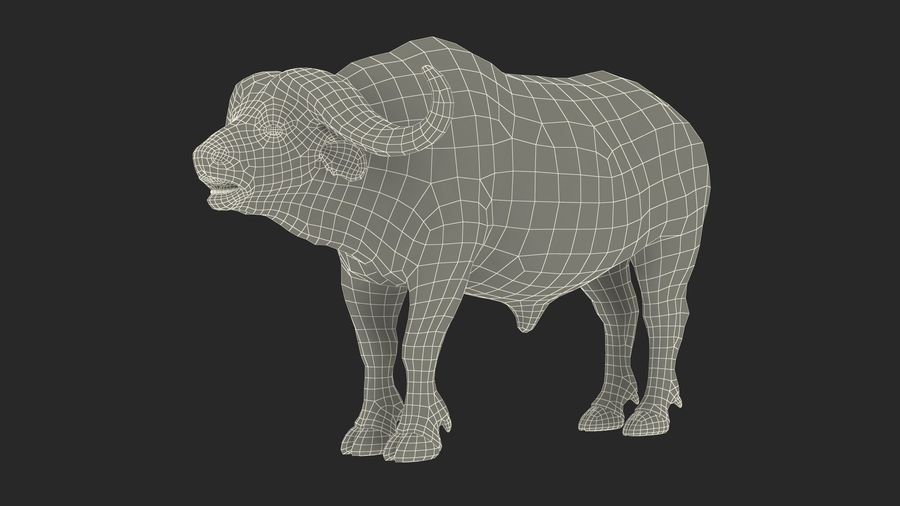 African Animals Collection 7 royalty-free 3d model - Preview no. 75