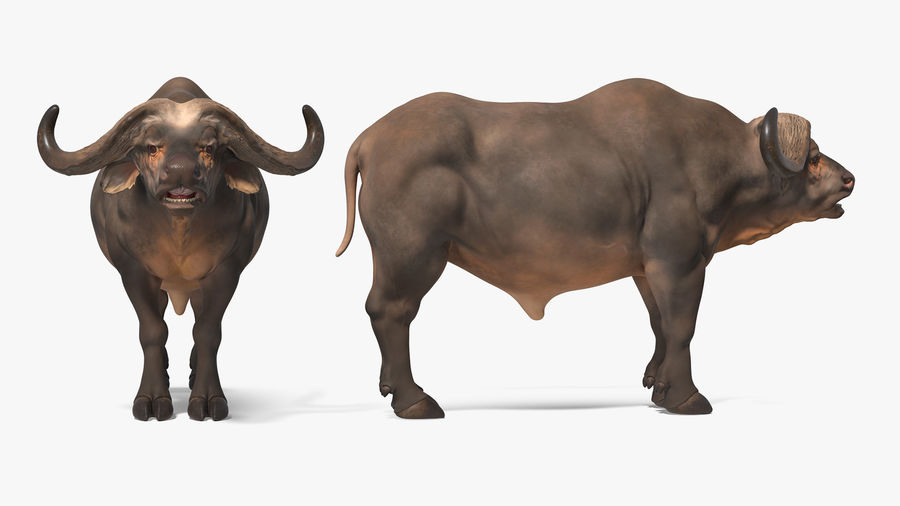 African Animals Collection 7 royalty-free 3d model - Preview no. 1