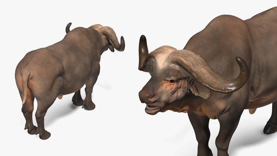 African Animals Collection 7 royalty-free 3d model - Preview no. 9