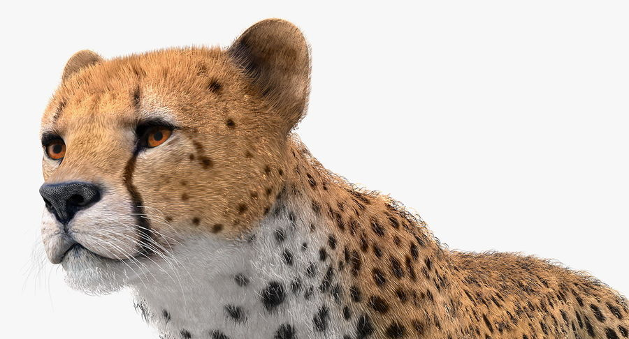 African Animals Collection 7 royalty-free 3d model - Preview no. 42