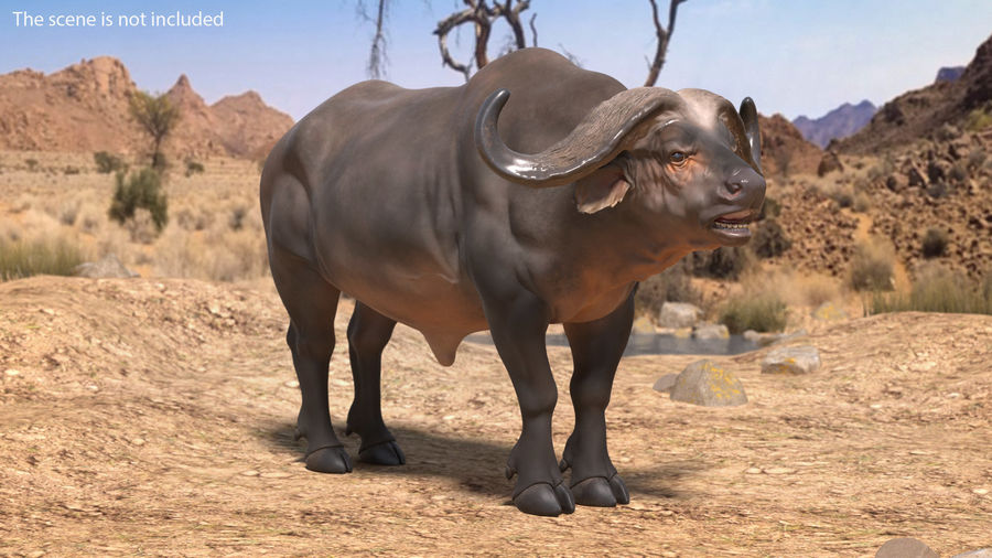 African Animals Collection 7 royalty-free 3d model - Preview no. 4