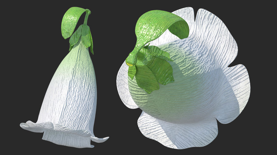 White Foxglove Flower royalty-free 3d model - Preview no. 3