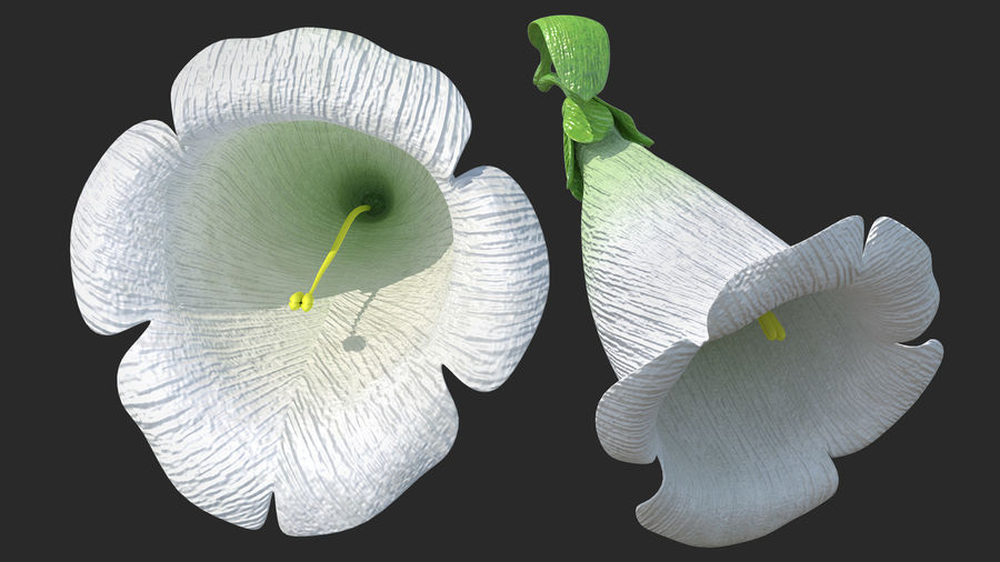 White Foxglove Flower royalty-free 3d model - Preview no. 2