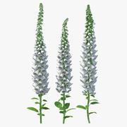 White Foxglove Plants Set 3d model