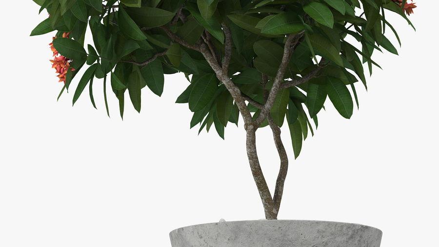 Rośliny ozdobne w doniczkach royalty-free 3d model - Preview no. 7