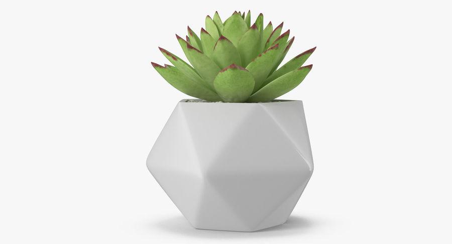 Rośliny ozdobne w doniczkach royalty-free 3d model - Preview no. 19