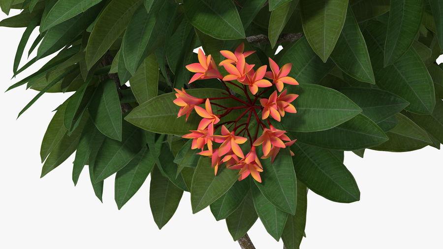 Rośliny ozdobne w doniczkach royalty-free 3d model - Preview no. 10