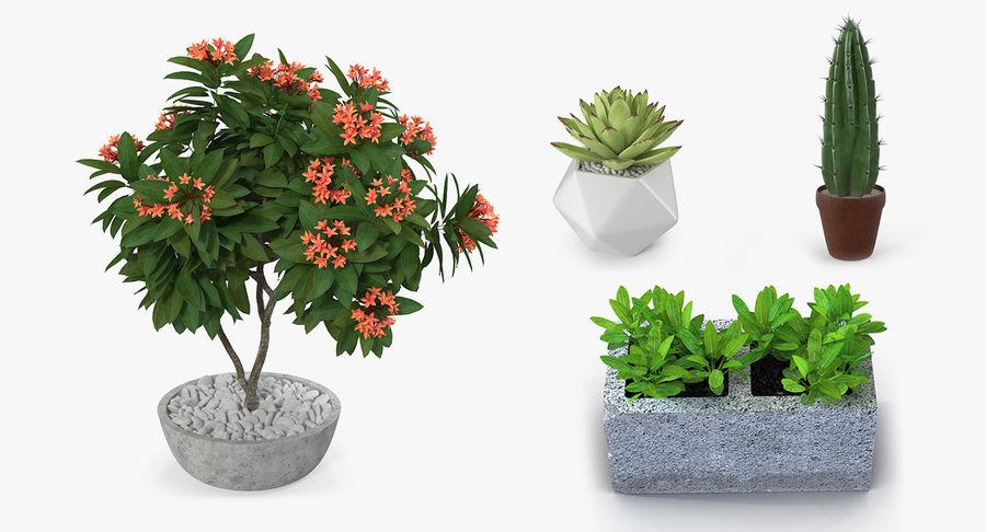 Rośliny ozdobne w doniczkach royalty-free 3d model - Preview no. 2