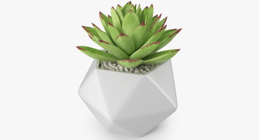 Rośliny ozdobne w doniczkach royalty-free 3d model - Preview no. 17